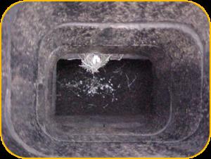 Animal Removal - Chimney Swift